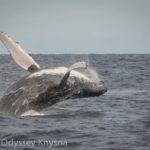 Guest blog: Wondrous Whales